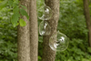 """Picture of Hanging Votive Holder Clear Glass Orb  Set on 6  